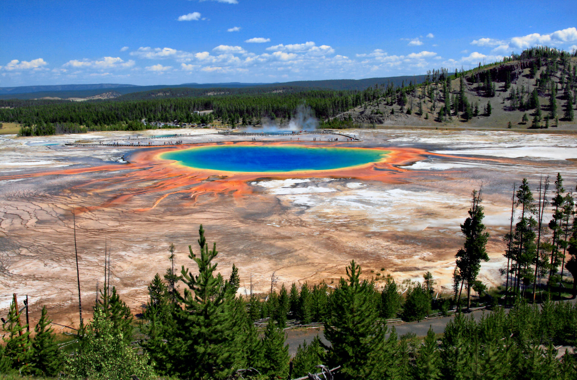 Yellowstone y Grand Teton en libertad